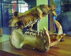 Έκθεση Παλαιοντολογικών Ευρημάτων