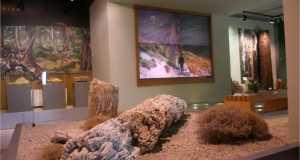 Μουσείο Φυσικής Ιστορίας Απολιθωμένου Δάσους Λέσβου