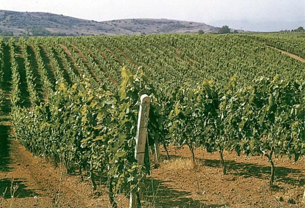 FedHATTA: Εκδήλωση ενημέρωσης για τα ονομαστά κρασιά της Νάουσας