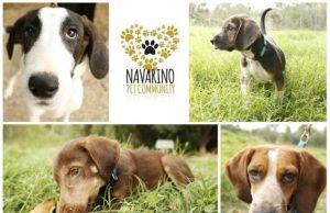 Αυτόν το Σεπτέμβριο, «υιοθετούμε, δεν αγοράζουμε» ένα τετράποδο στο The Westin Resort Costa Navarino