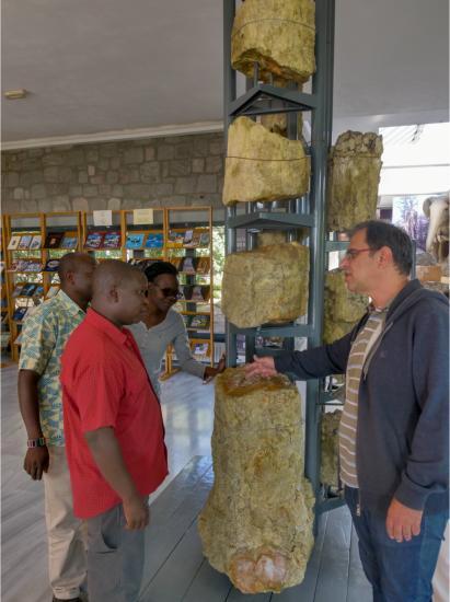 Μουσείο Απολιθωμένου Δάσους - Κένυα Γεωπάρκο - Mentoring UNESCO