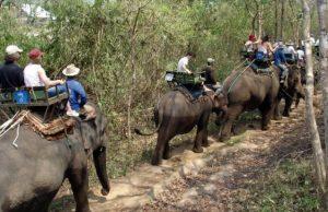 Tourist Advice: Elephant rides considered 'Unacceptable'