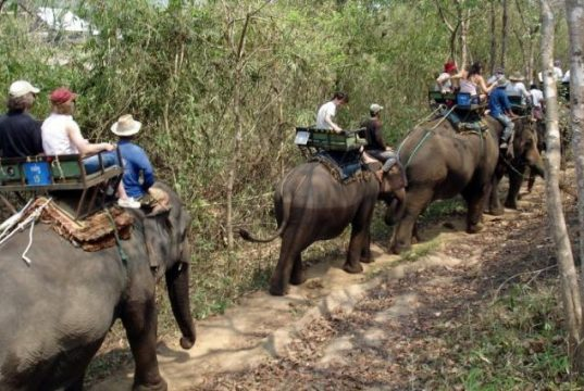Tourist Advice: Elephant rides considered 'Unacceptable'