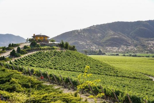 World's Biggest Conference on Wine Tourism Celebrates: Rural Transformation and Jobs