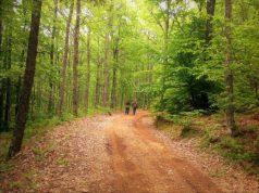 Η διαδρομή του Ελάτου, από τον Ταξιάρχη στην Αρναία