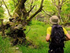 Μαίναλο Trail